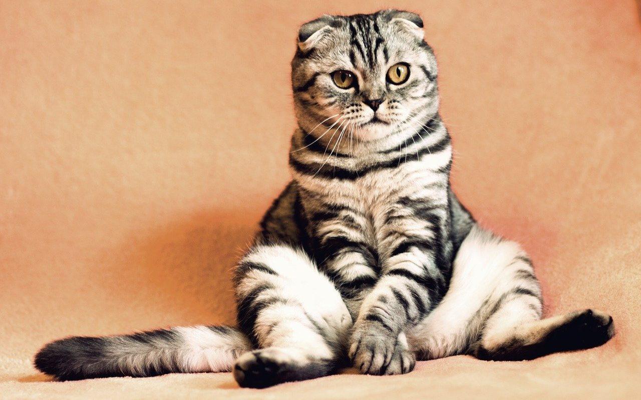 Was kostet eine Katze? Eine ÜBersicht von der ANschaffung über die Grundausstattung bis zu den laufenden Kosten und den Kosten im Alter.