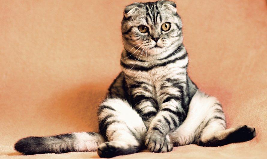 Was Katzen kosten: Von Anschaffung bis laufende Kosten