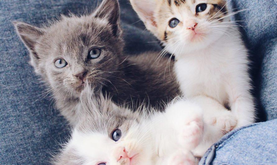 Was Kitten lernen müssen: 3. Katzen kämmen, ja bitte!