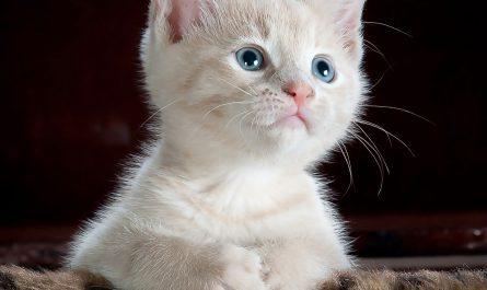 Katze zieht ein Grundausstattung und viele Praxistipps für den Einzug