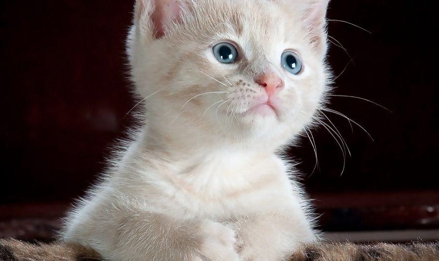 Hurra, die Katze ist da: So gelingt der perfekte Einzug