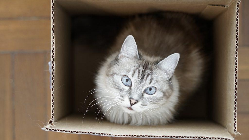 Katzen benötigen einen, besser, mehrere Schlafplätze. Doch sie lieben auch ungewöhnliche Schlafplätze. Einer der besten: Ein Karton. Foto: Pixabay.com/Cbetito88