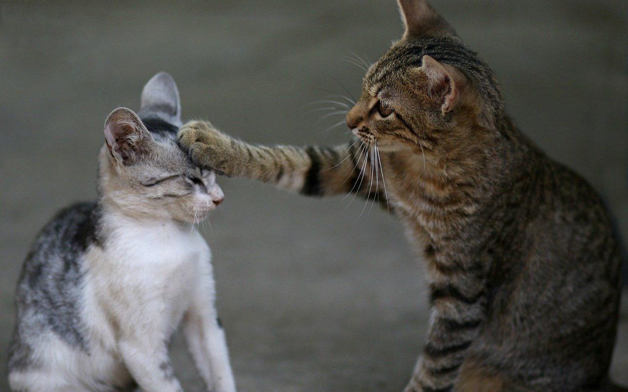 Katzen kratzen beißen spielen Erziehung Katzenbabys