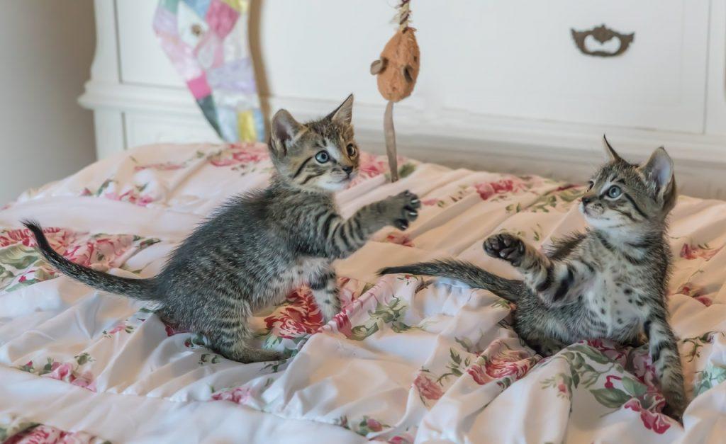 Katzen kratzen beißen spielen 2