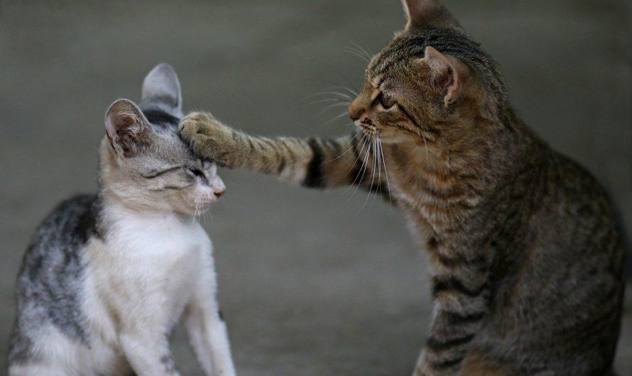 Katzenbabys müssen lernen… 1. Kratzen und beißen bei Katzen, nein danke!