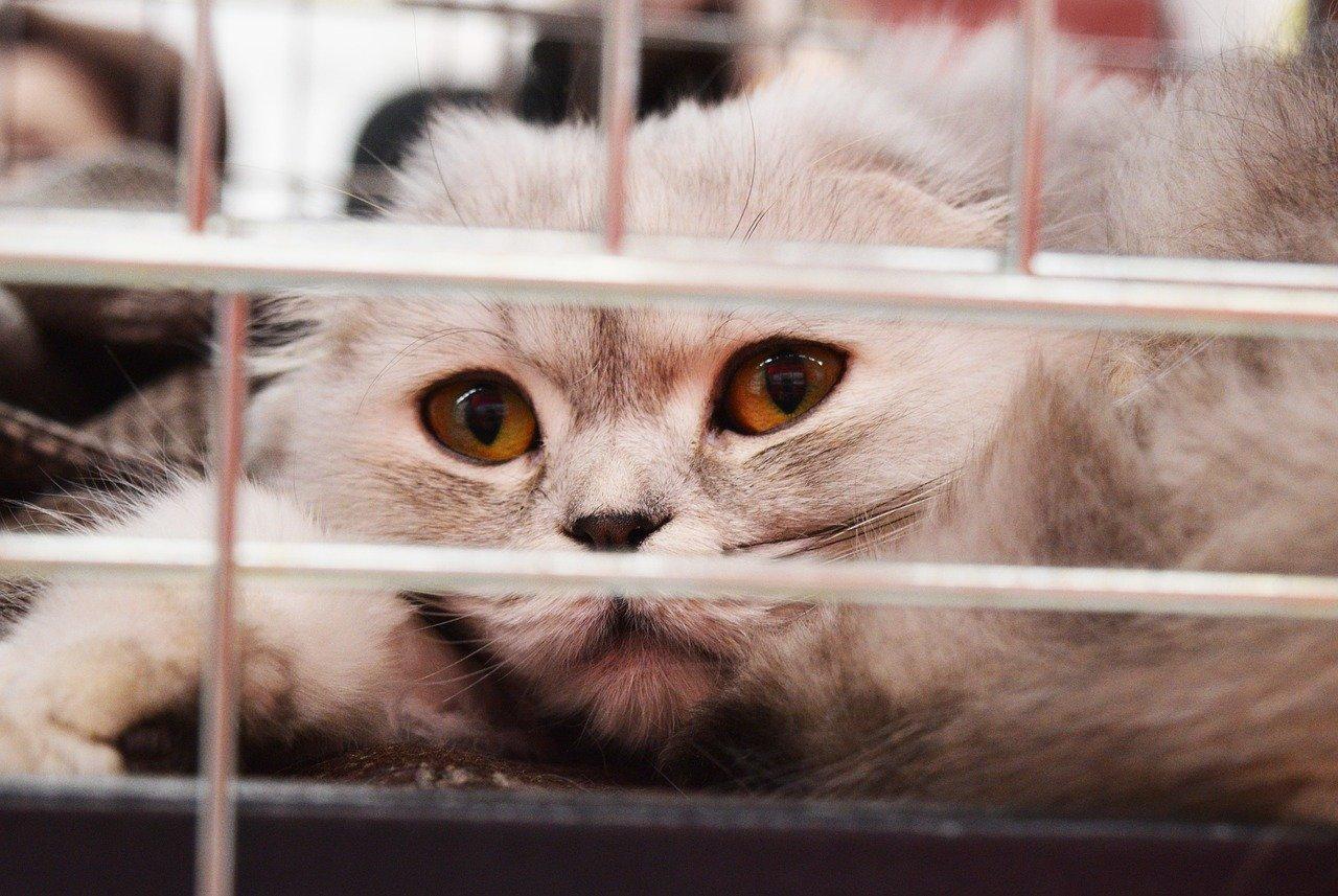Was kostet eine Katze Katze aus dem Tierheim